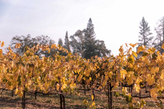 Napa Valley Fall Foliage